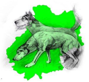 Balto type Husky ok chiens chats enfants ASSO46 ADOPTE Ob_78310
