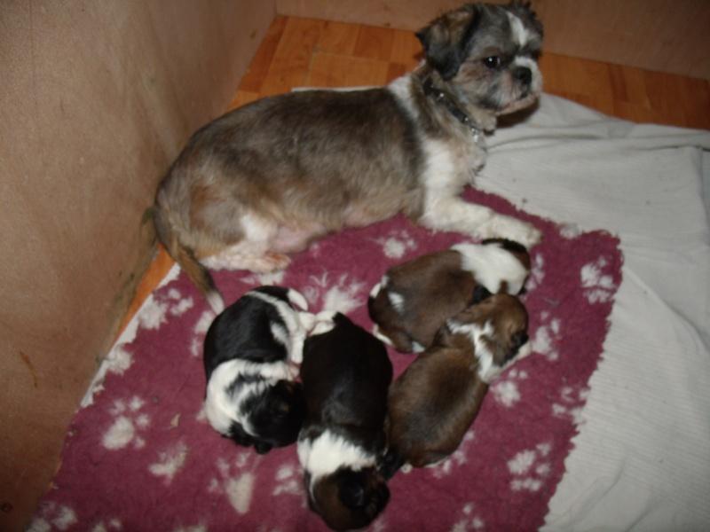 Naissance des 4 bébés de Gladys !! FÉLICITATIONS à Nini (la sage femme) et à la maman  - Page 2 Gedc4911