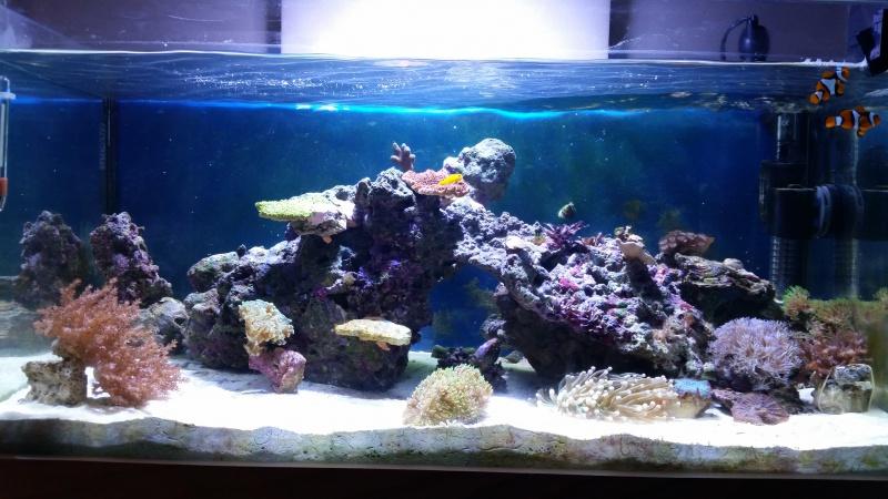 Mon premier aquarium eau de mer - Page 2 26464610