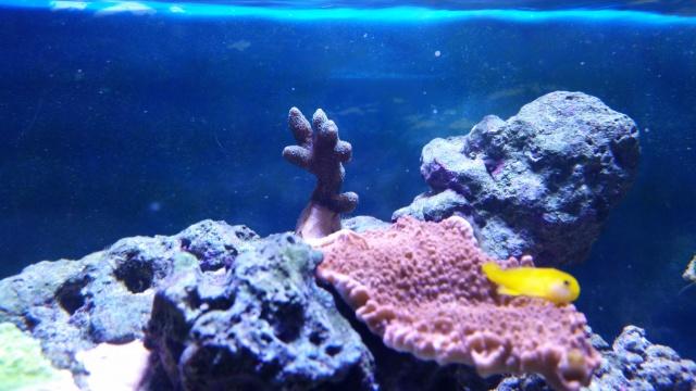 Mon premier aquarium eau de mer - Page 2 50934810