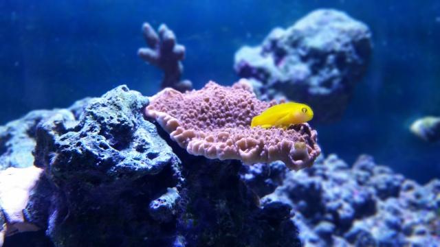 Mon premier aquarium eau de mer - Page 2 91501110