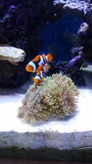 Mon premier aquarium eau de mer - Page 2 99099110