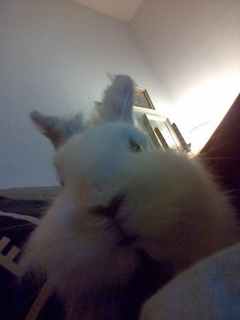 Capucin, jeune lapin tête de lion Selfie10