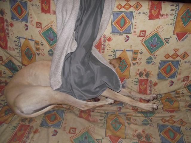KIRO (galgo presque aveugle, SF) dans sa famille chez HAPPYDAY - Page 20 Dscf3113
