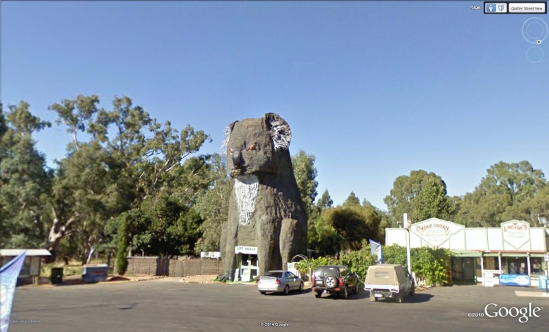 STREET VIEW : Kangourous Durras Australie Koa10