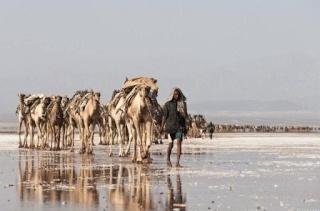 DESERT DE DALLOL (ETHIOPIE) Dallol10
