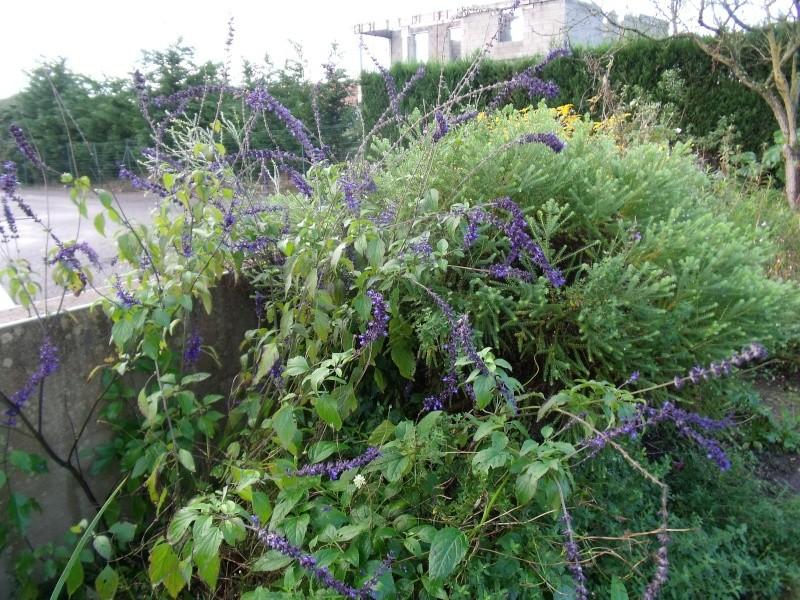 Le jardin ne s'endort pas encore... Dscf1310