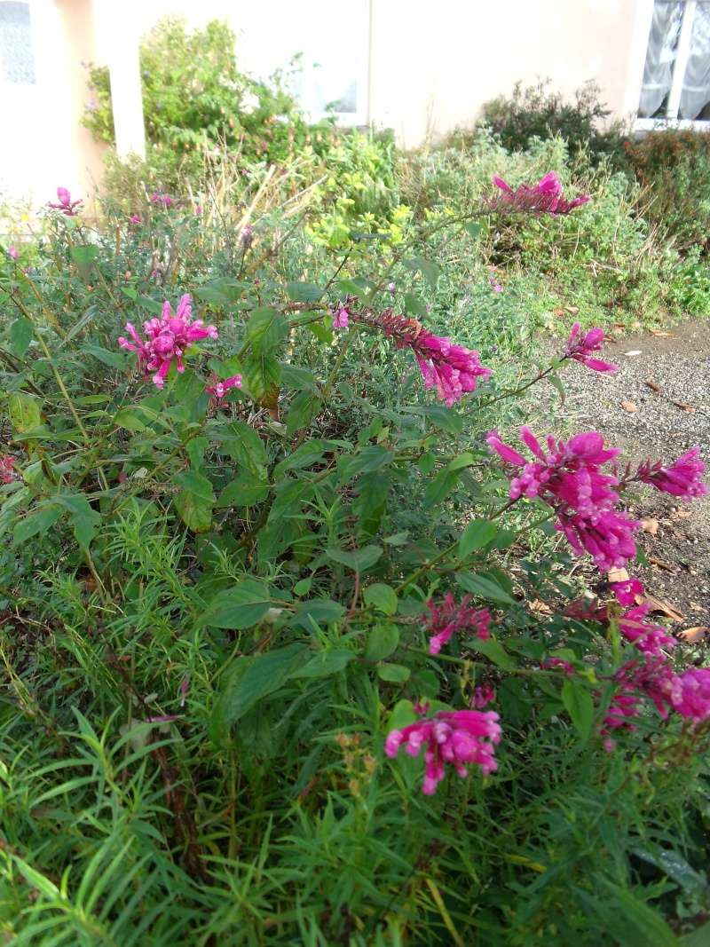 Le jardin ne s'endort pas encore... Dscf1312