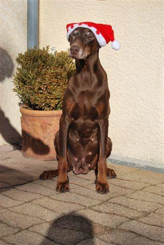 Noël arrive, concours photos Noel_210