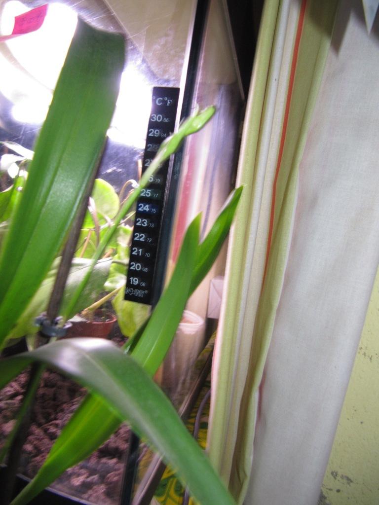 floraisons du moment ( Orchidées )  01113