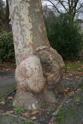 43 - les troncs d'arbres....  Photos reçues - Page 3 Dsc01914