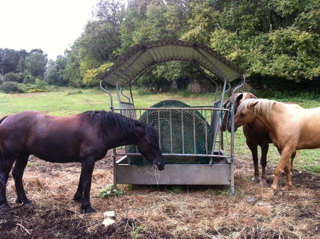pas de satiété chez le cheval ? Photo_10