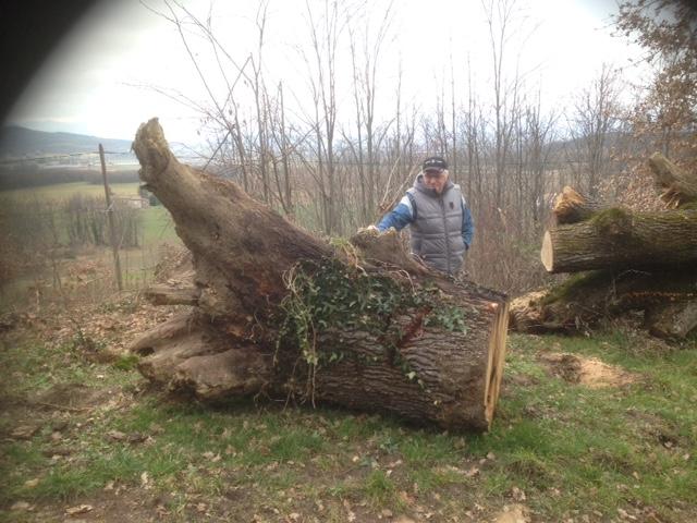 Un tronc de chêne a récupérer dans la drôme Image13