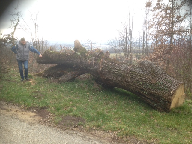 Un tronc de chêne a récupérer dans la drôme Image14