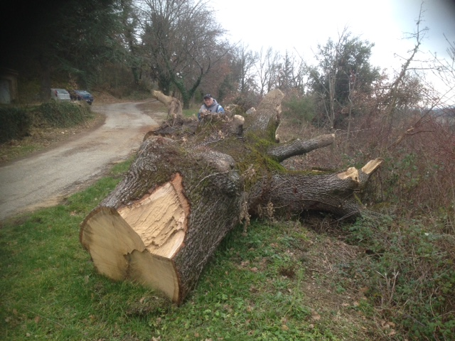 Un tronc de chêne a récupérer dans la drôme Image15