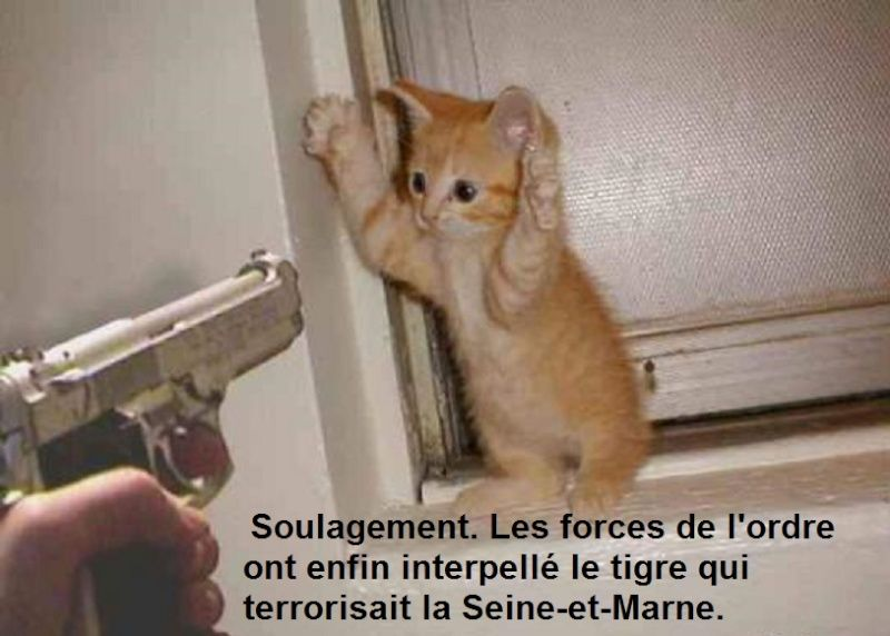 nos amis les animaux  - Page 4 10340110