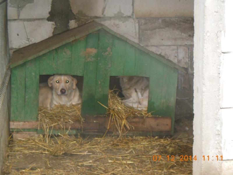 BOX (trois) , croisé labrador, né en 2007 -  Parrainée par Samie -R-F-SOS-SC- - Page 2 04511