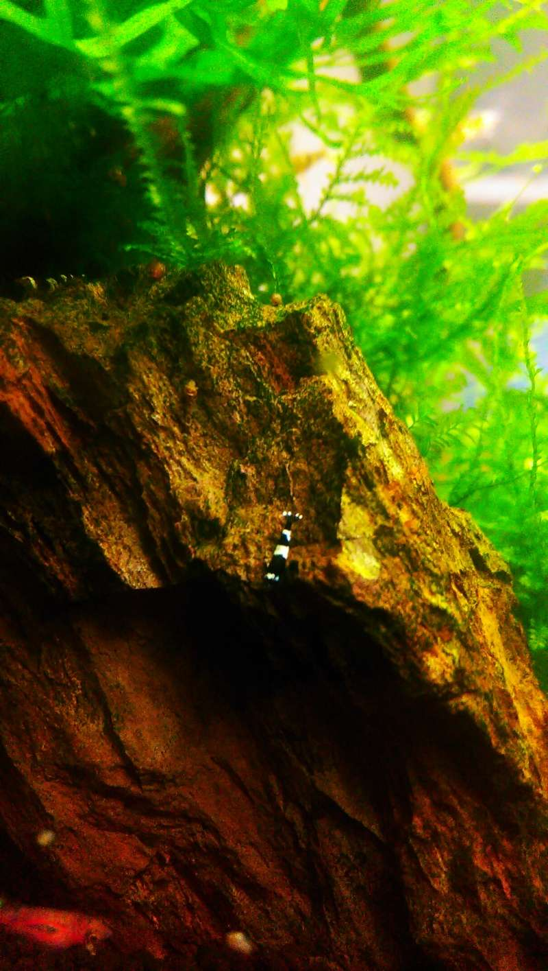 Mon bac à Taiwan Bee  - Page 4 Imag1516