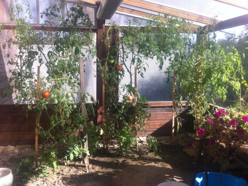 semis de tomates - Page 2 Img_0310