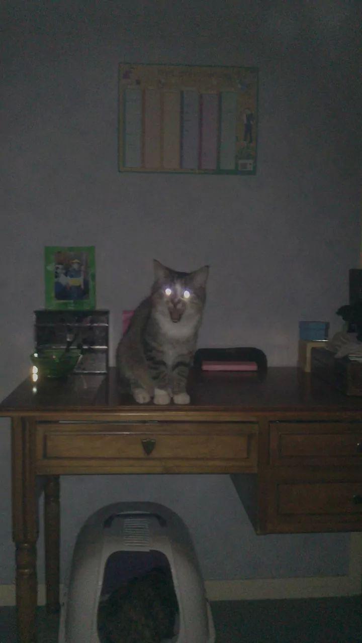 Hadès, chaton tigré et blanc né le 11/05/2012  par NADINE (36) J10