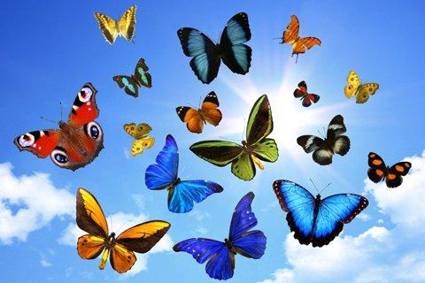 Le bal des papillons 31130210
