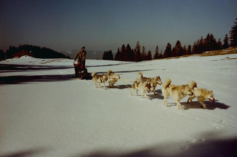 Recherche photos de Groenlandais Pict0011
