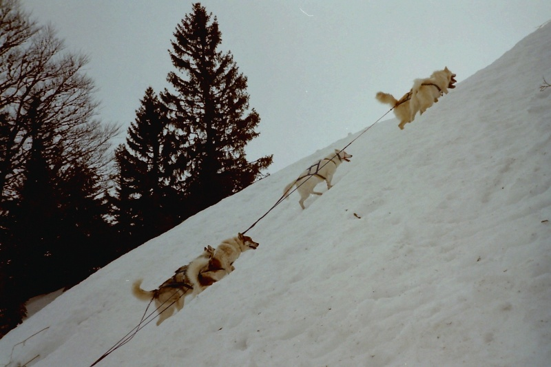 Recherche photos de Groenlandais Pict0015