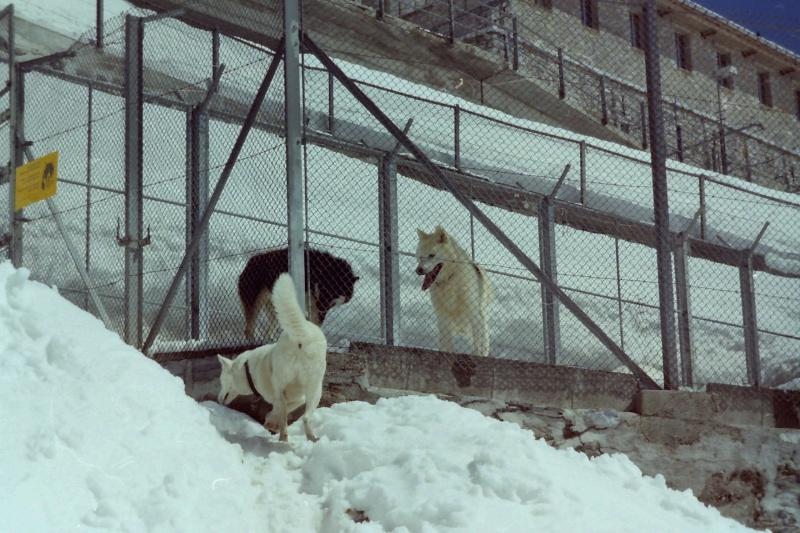 Recherche photos de Groenlandais Pict0018