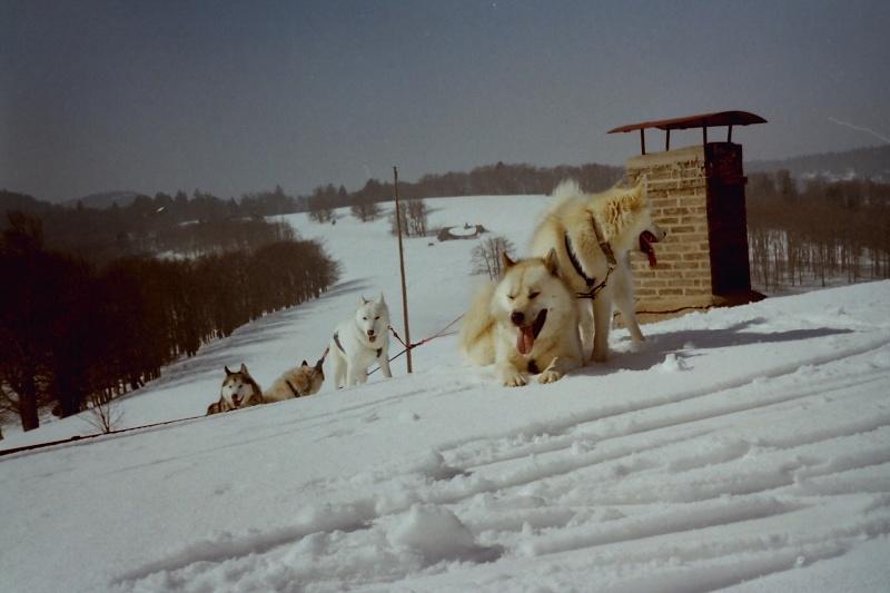 Recherche photos de Groenlandais Pict0026