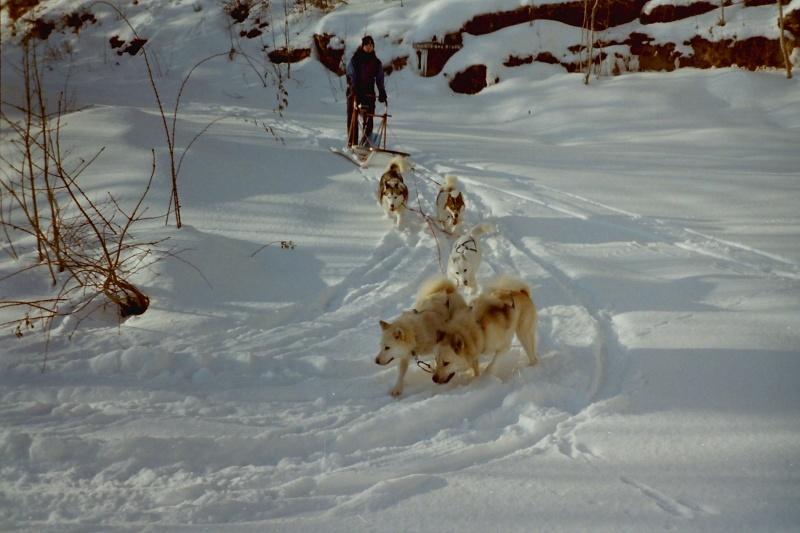 Recherche photos de Groenlandais Pict0028