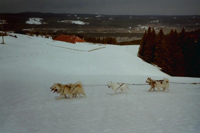 Recherche photos de Groenlandais Pict0029