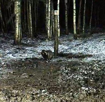 Wildtier-Livecams - Seite 5 Marder10