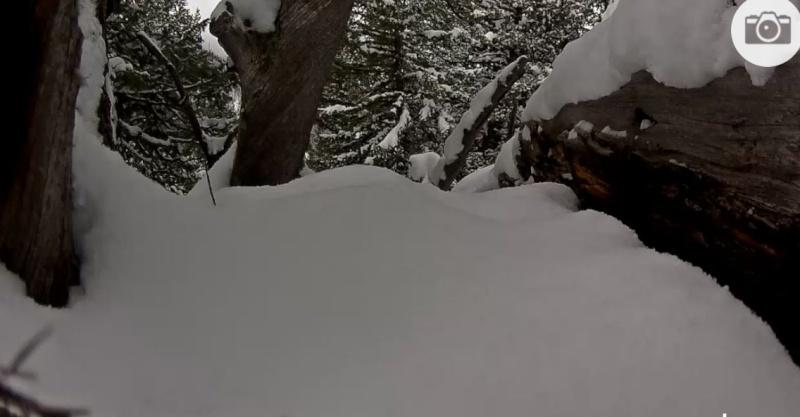 Wildtier-Livecams - Seite 4 Schnee10