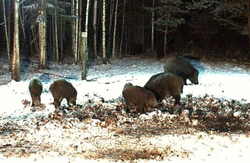 Wildtier-Livecams - Seite 5 Schwei10