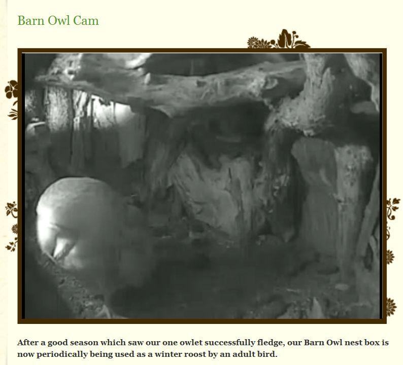 Wildtier-Livecams - Seite 4 Winter10