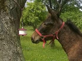 Jouet pour chevaux 96699110