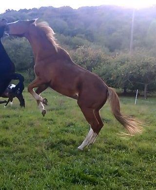 Article à paraitre : Les chevaux taulards (de club) : Qui veut témoigner? 99504911