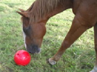 Jouet pour chevaux Image12