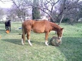 Jouet pour chevaux Imager10