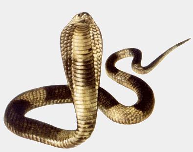 Pourquoi sataniser un serpent de l'Eden ? - Page 4 Co10