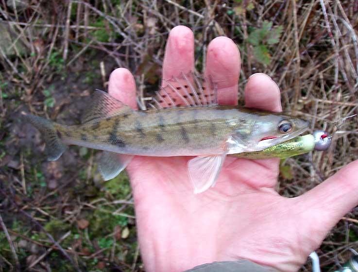Vos sorties de pêche de Décembre 2014 Mini_s10