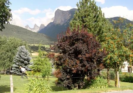 Sorbus aucuparia - sorbier des oiseleurs - cultivars et hybrides Rimg6312