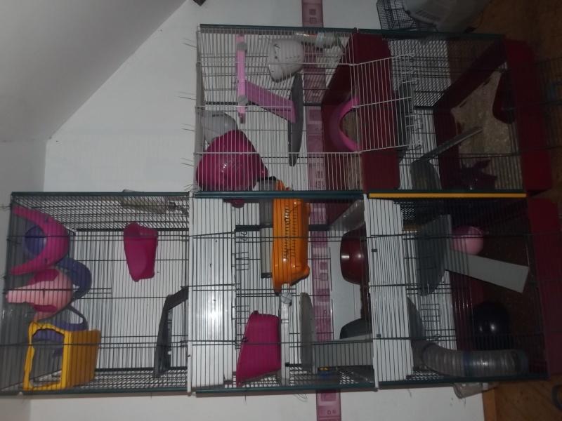 Photos de vos cages - Page 3 Dscf4811