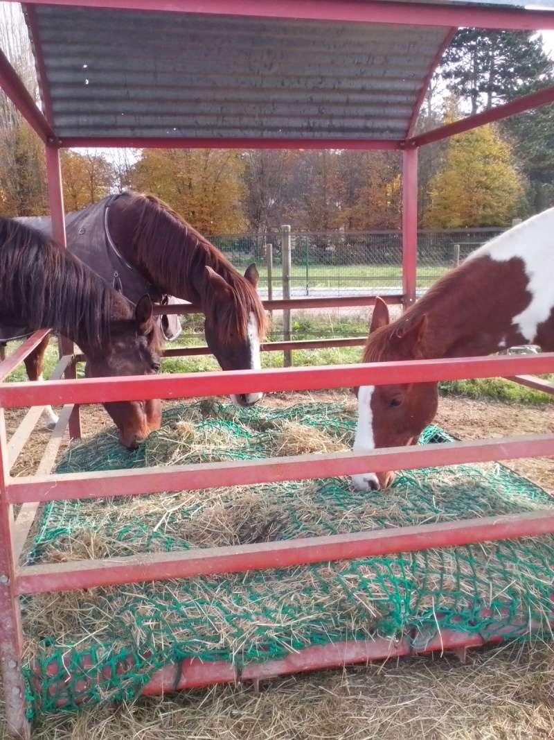 pas de satiété chez le cheval ? 20141111
