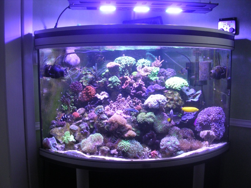 mon petit récif Dscn1611