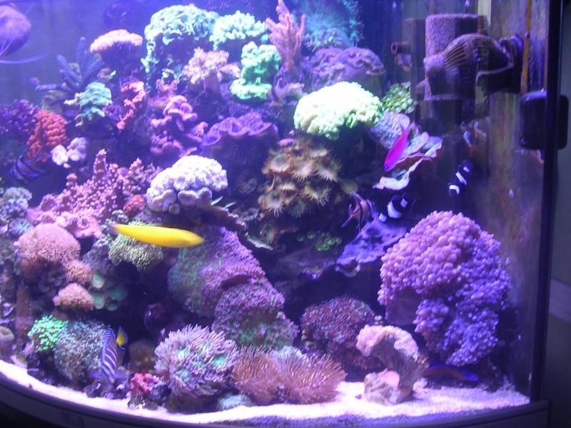 mon petit récif Dscn1612