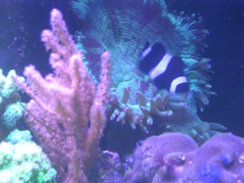 mon petit récif Dscn1615