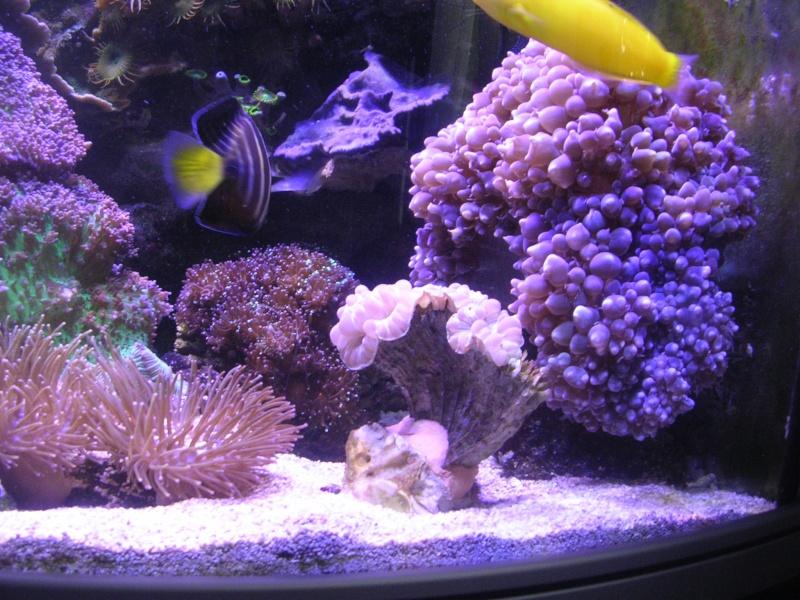 mon petit récif Dscn1616
