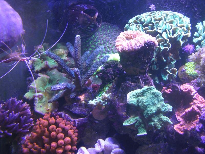 mon petit récif Dscn1617