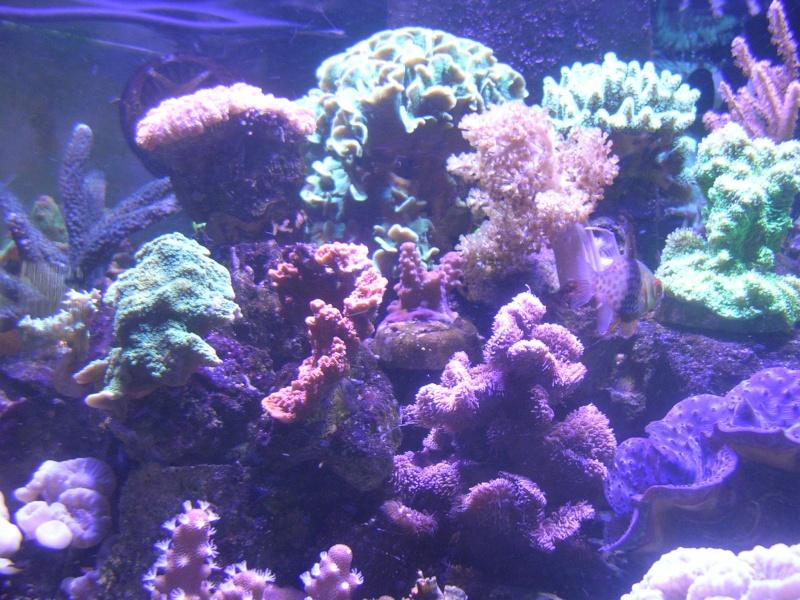 mon petit récif Dscn1618